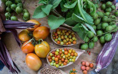 Voces de la Tierra de Contagio Radio:  La soberanía alimentaria y las semillas nativas. ¿Por qué el decreto 523 pondría en riesgo la autosuficiencia alimentaria?